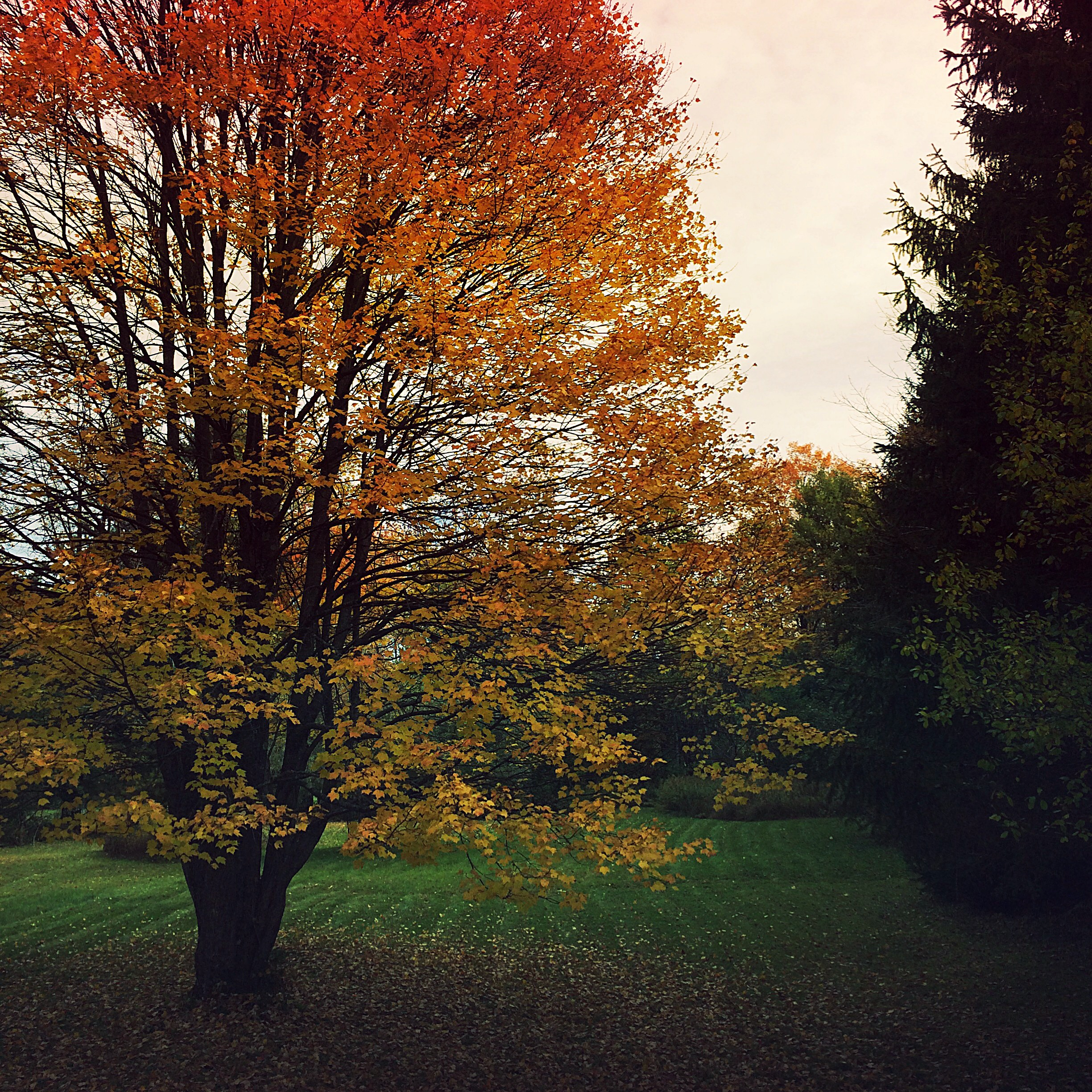 ©Tree With Fallen Leaves by Dena T Bray