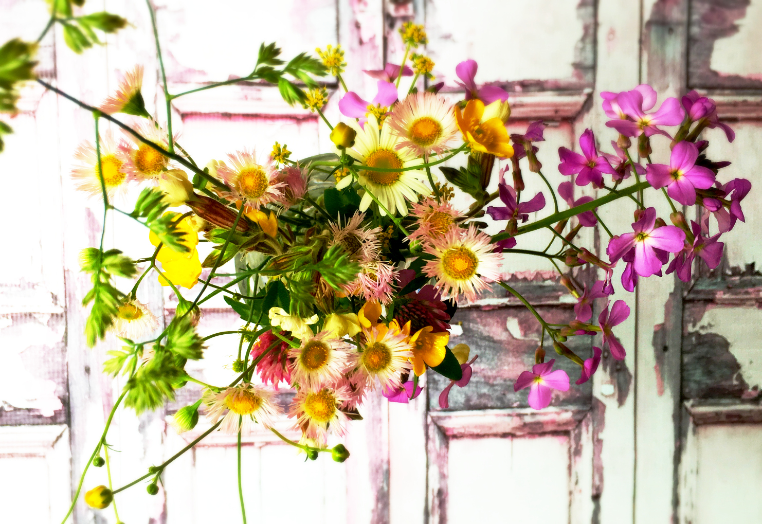 ©Wildflowers by Dena T Bray