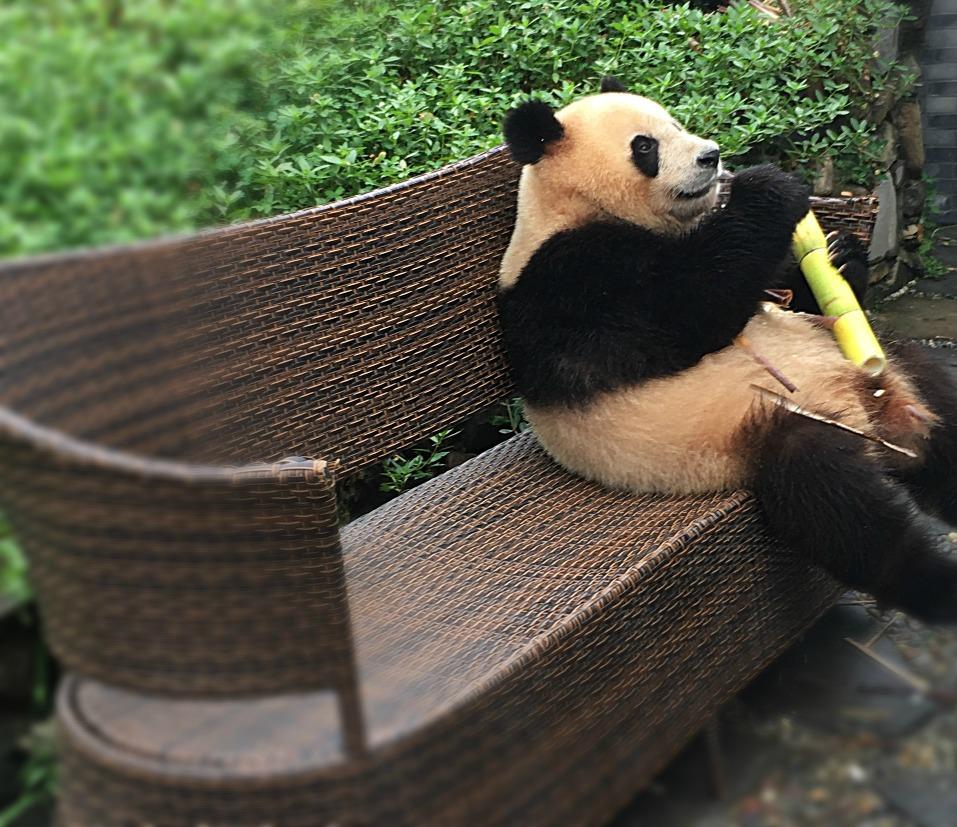 Panda Strikes A Pose