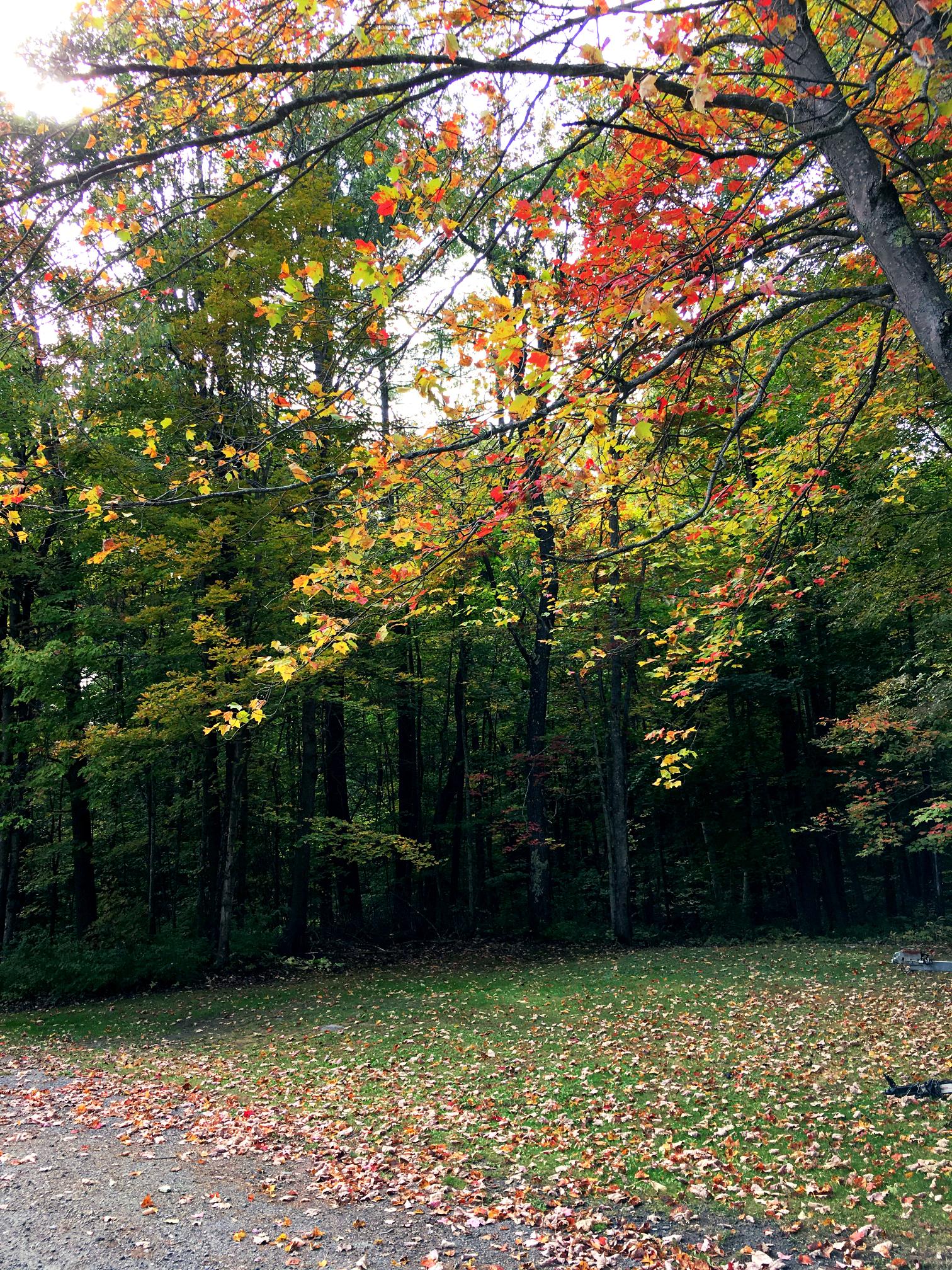 ©Falling Leaves by Dena T Bray.jpg