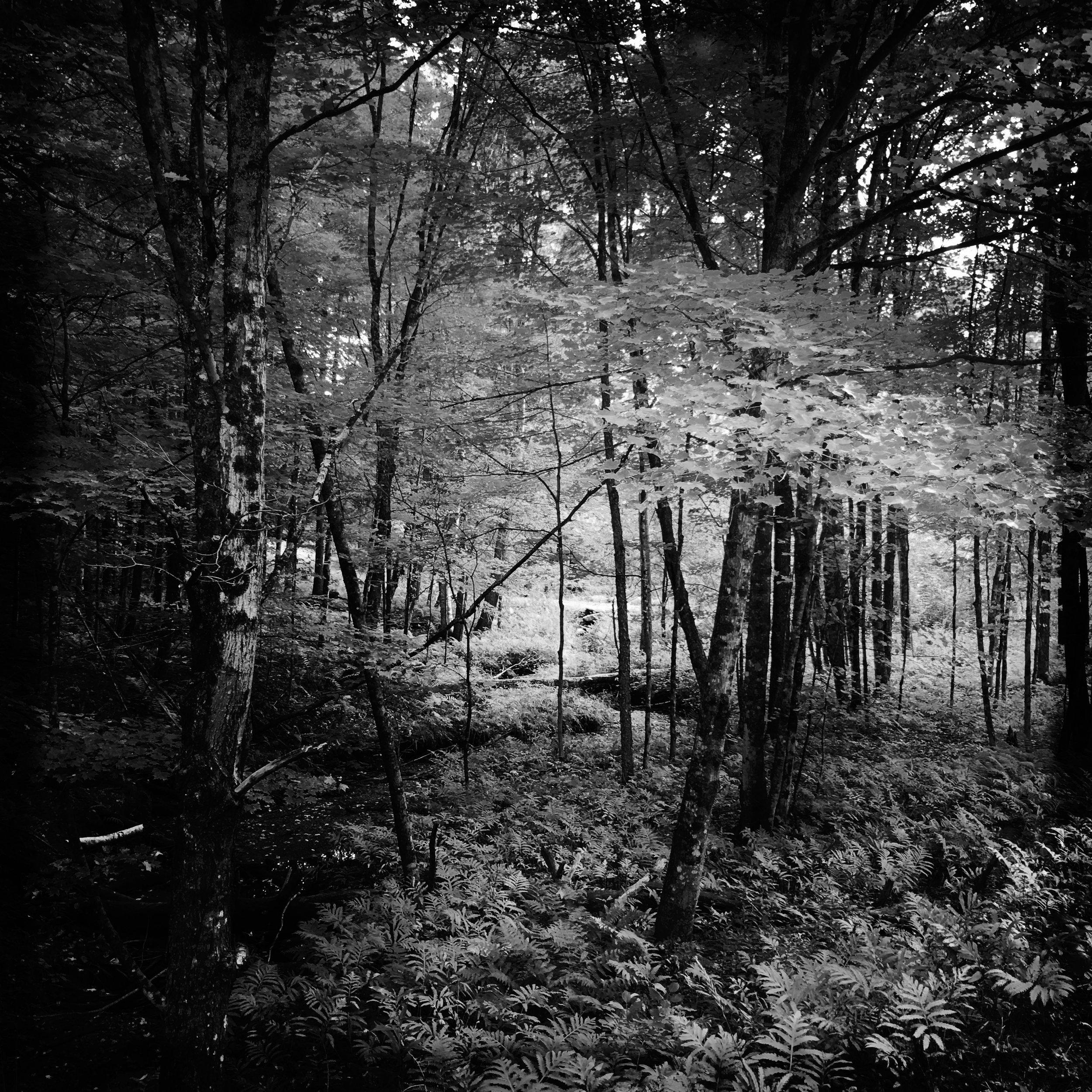 ©Woods in Black & White by Dena T Bray