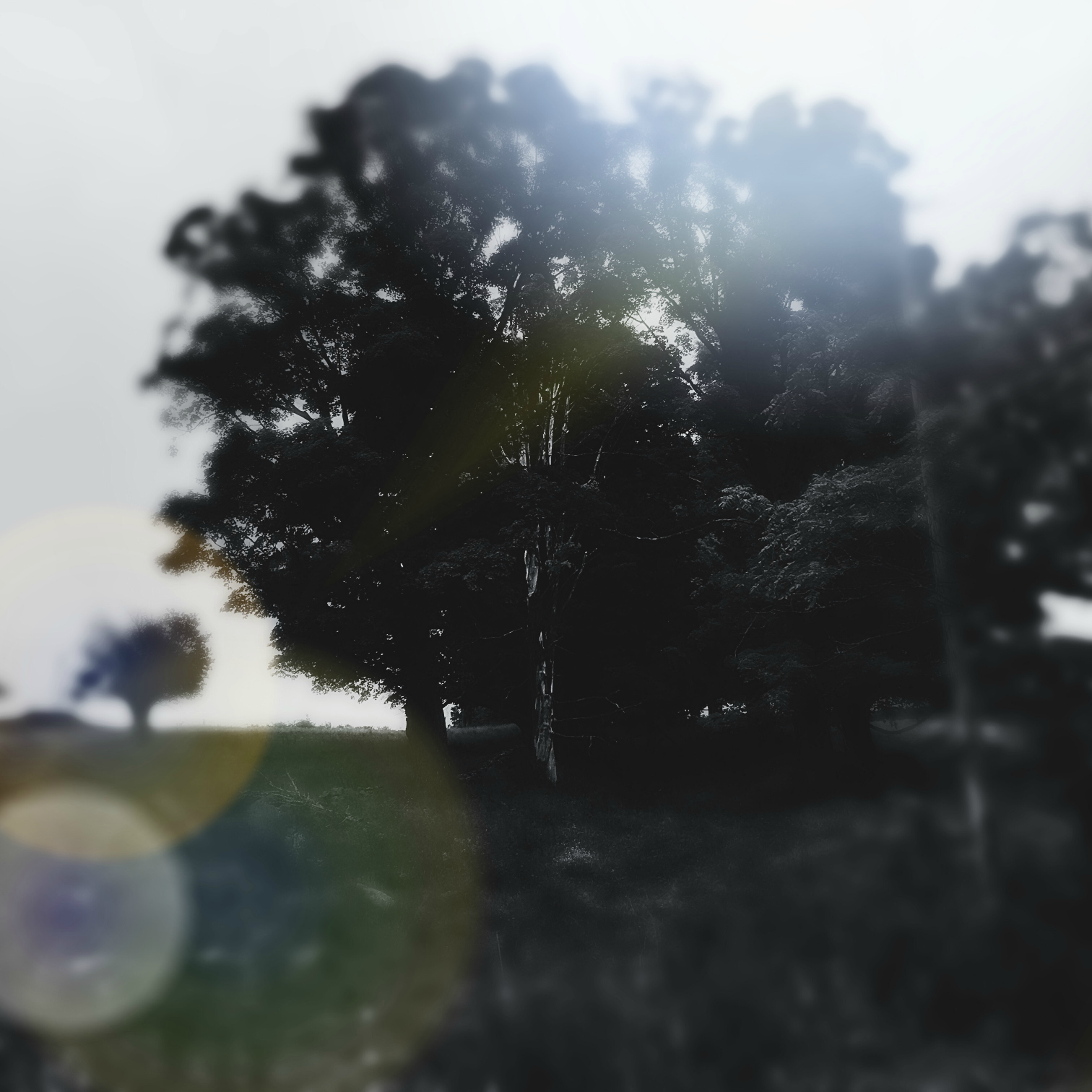 ©Trees At Dawn by Dena T Bray