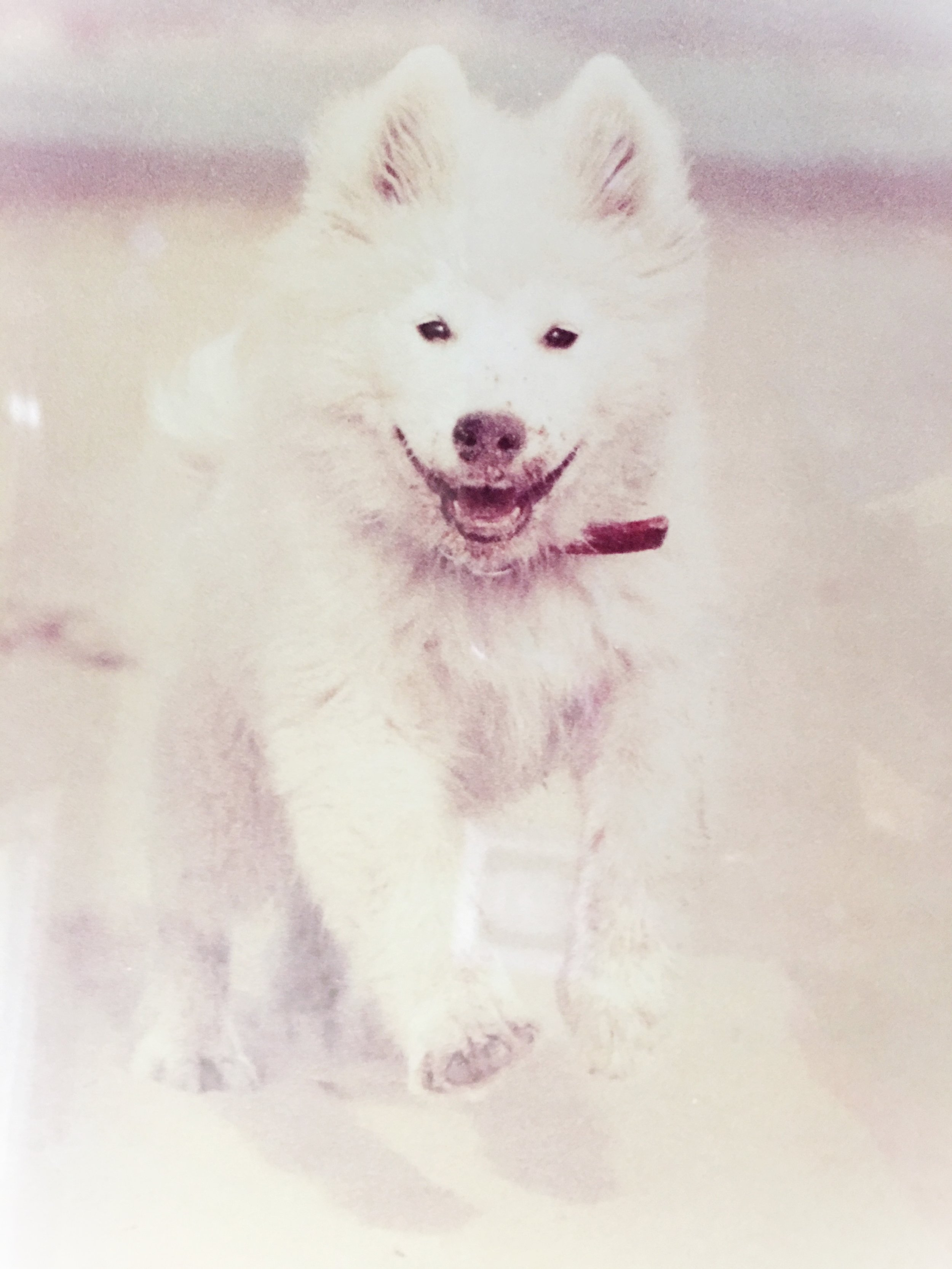 Bailey As Puppy, Lake Michigan, Chicago
