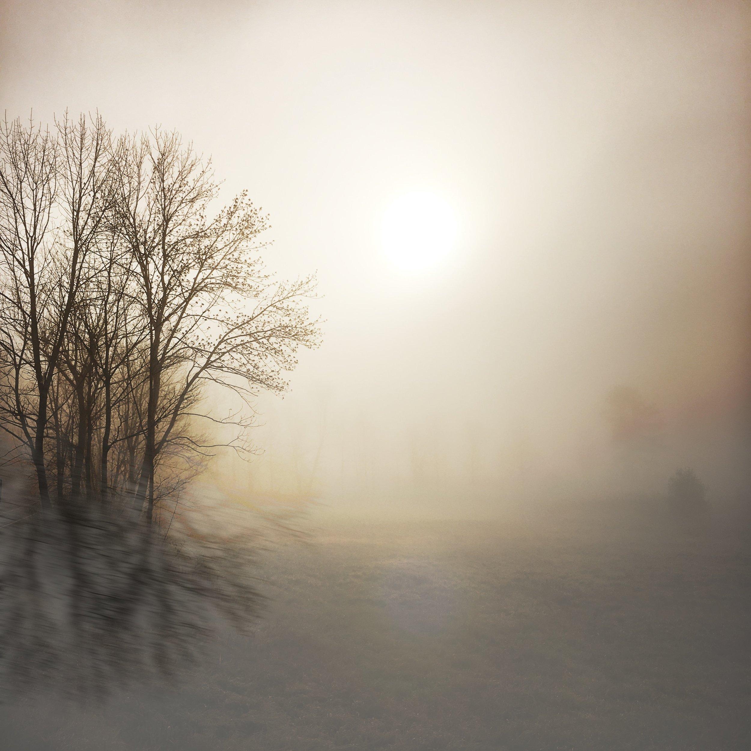 ©Morning Mist by Dena  T Bray