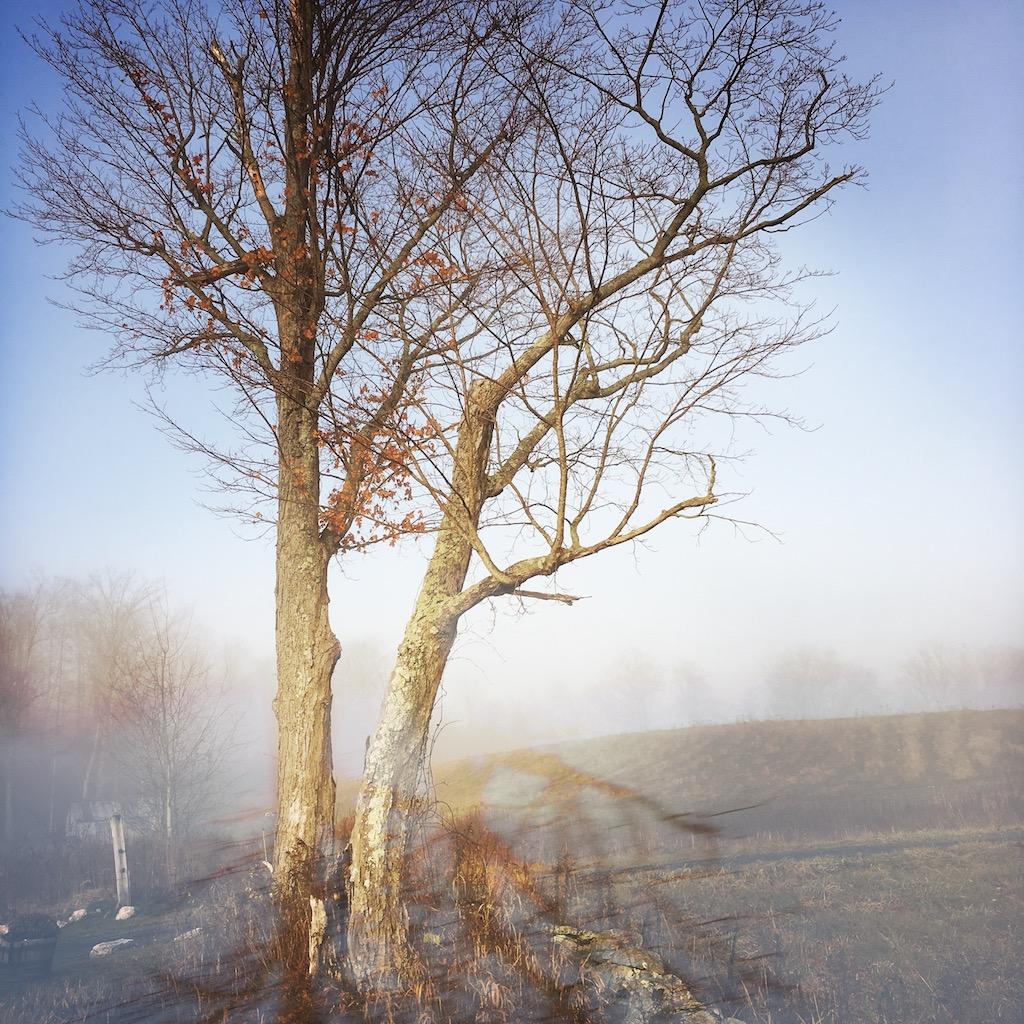 © Morning Mist 2 by Dena T Bray