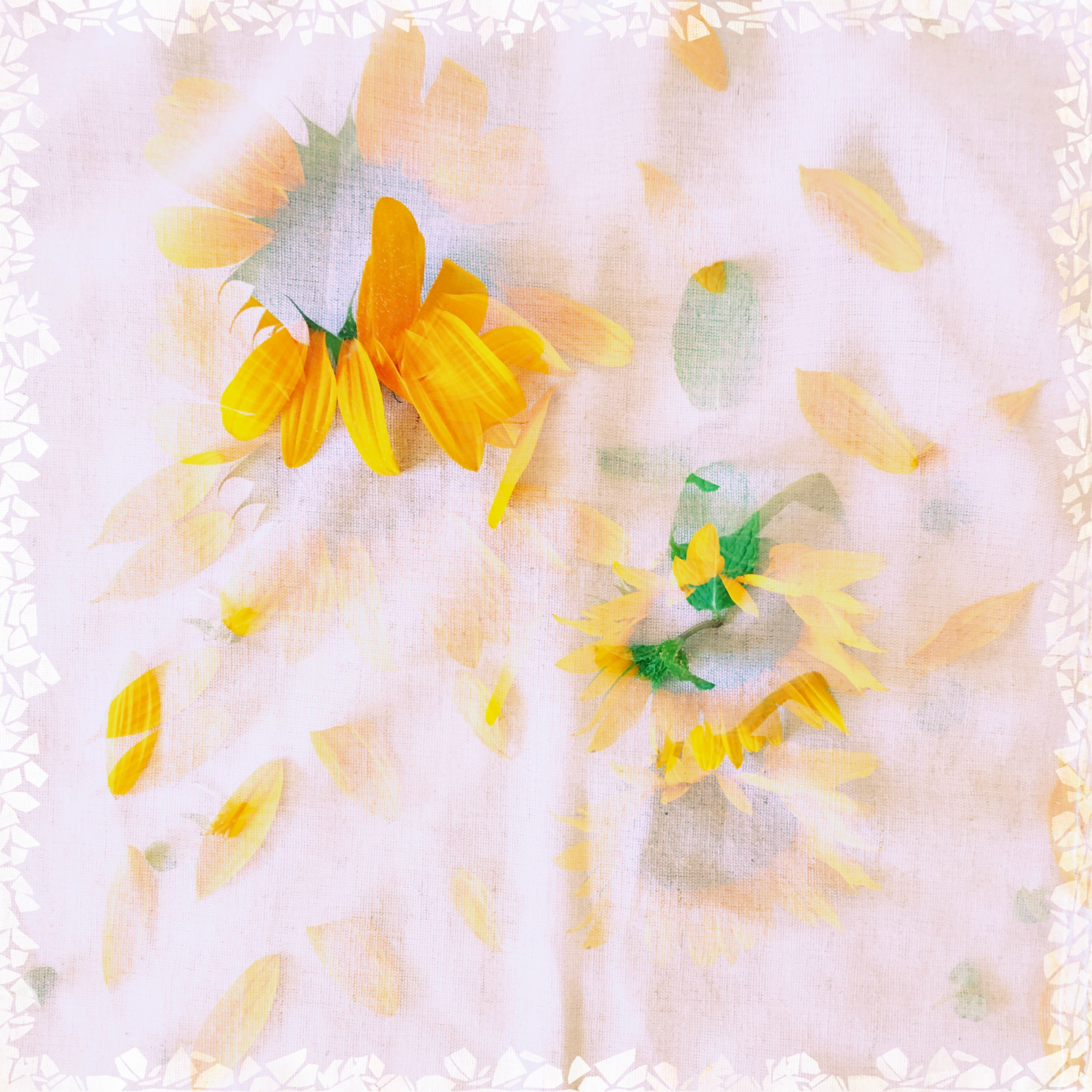 ©Artful Sunflower by Dena T Bray