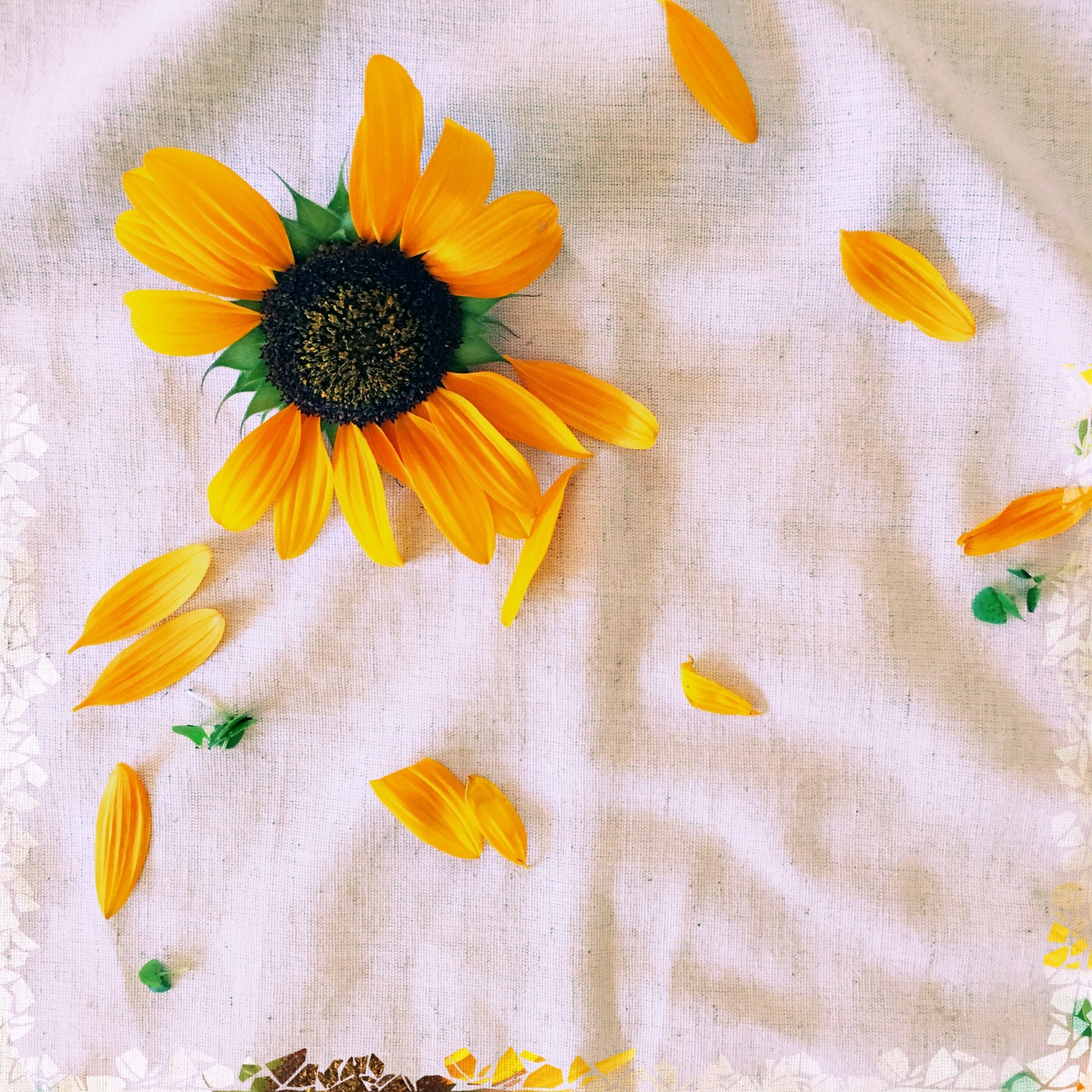 ©Simple Sunflower by Dena T Bray