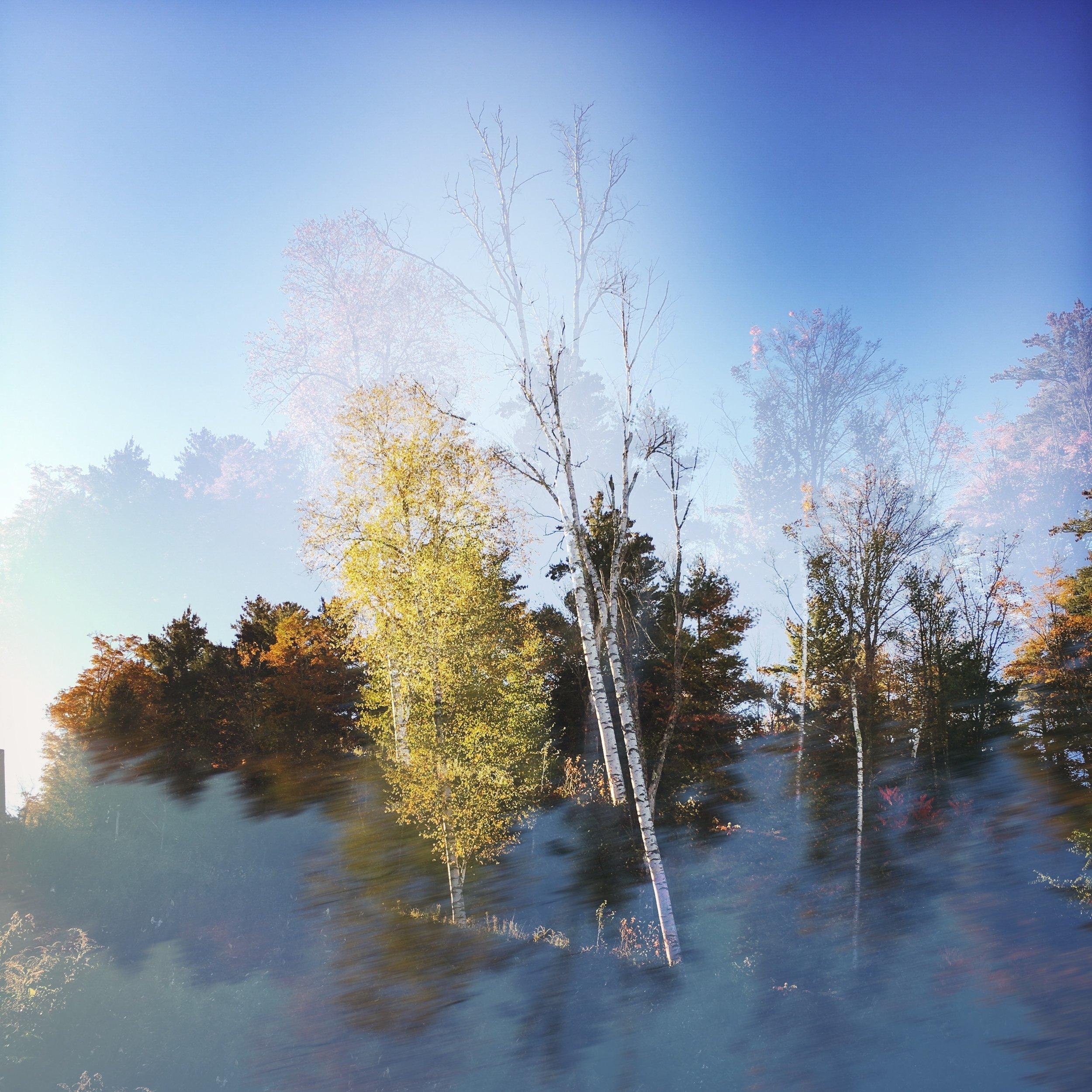 ©Golden Tree by Dena T Bray