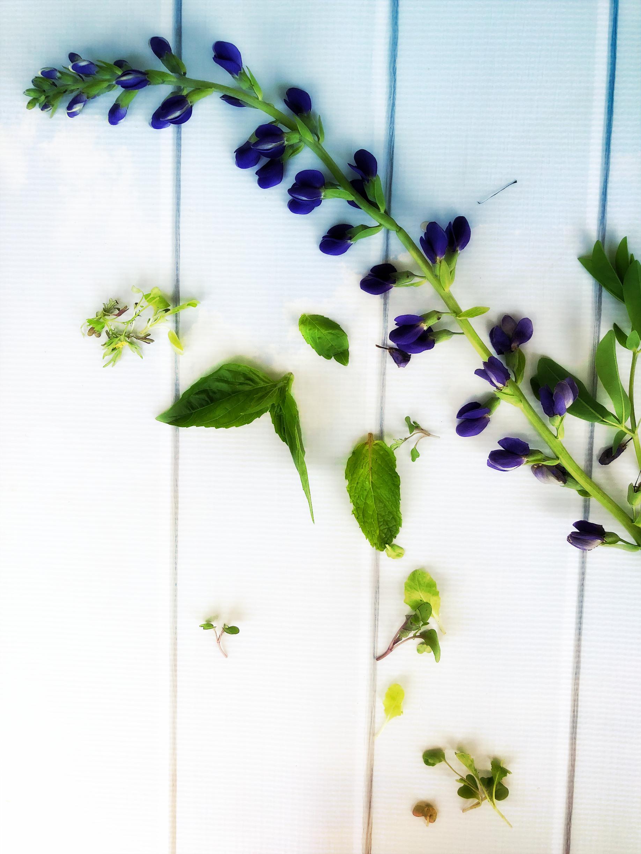 ©Simple Flower and Herbs by Dena T Bray.jpg