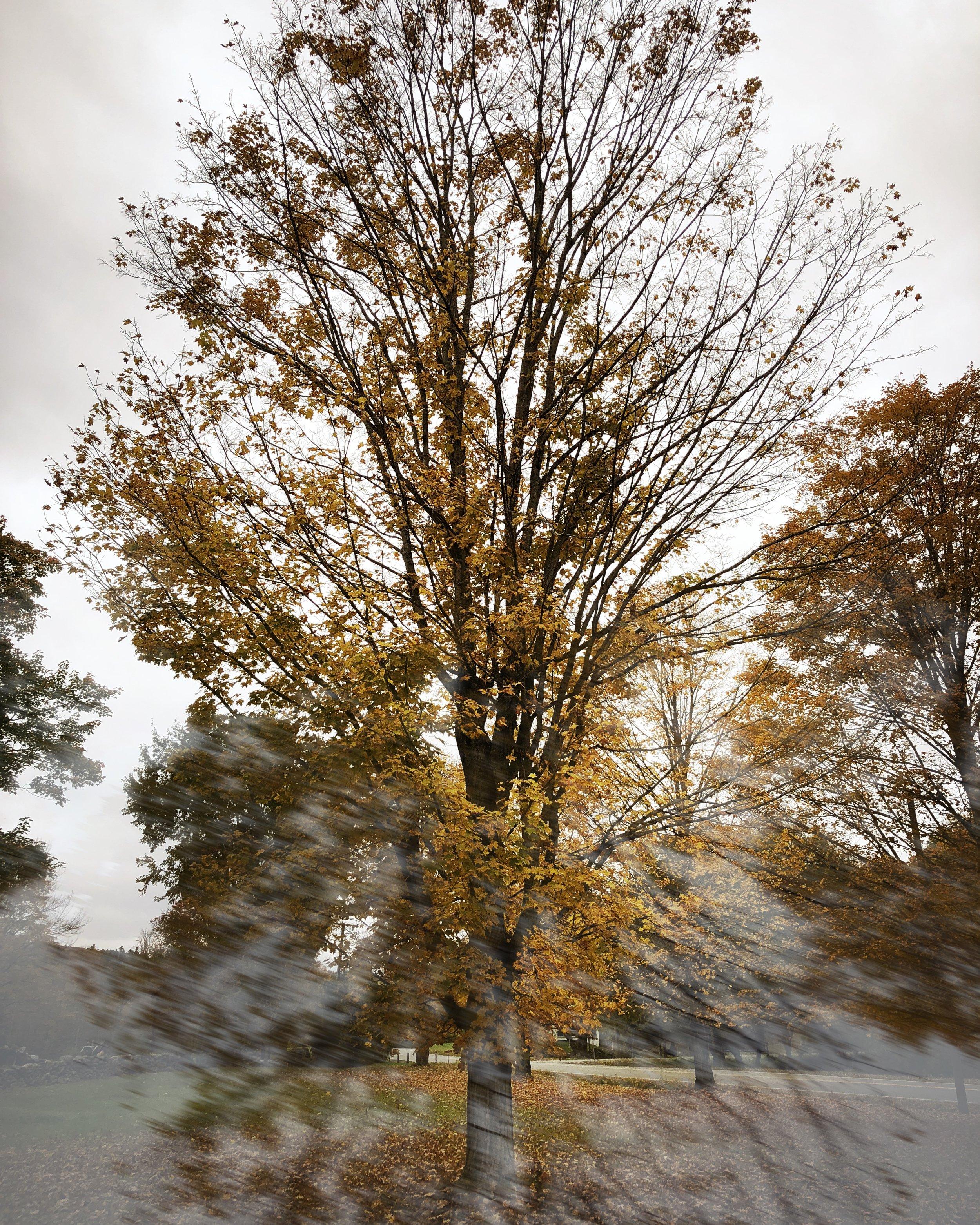 ©Tree in Motion by Dena T Bray.jpg