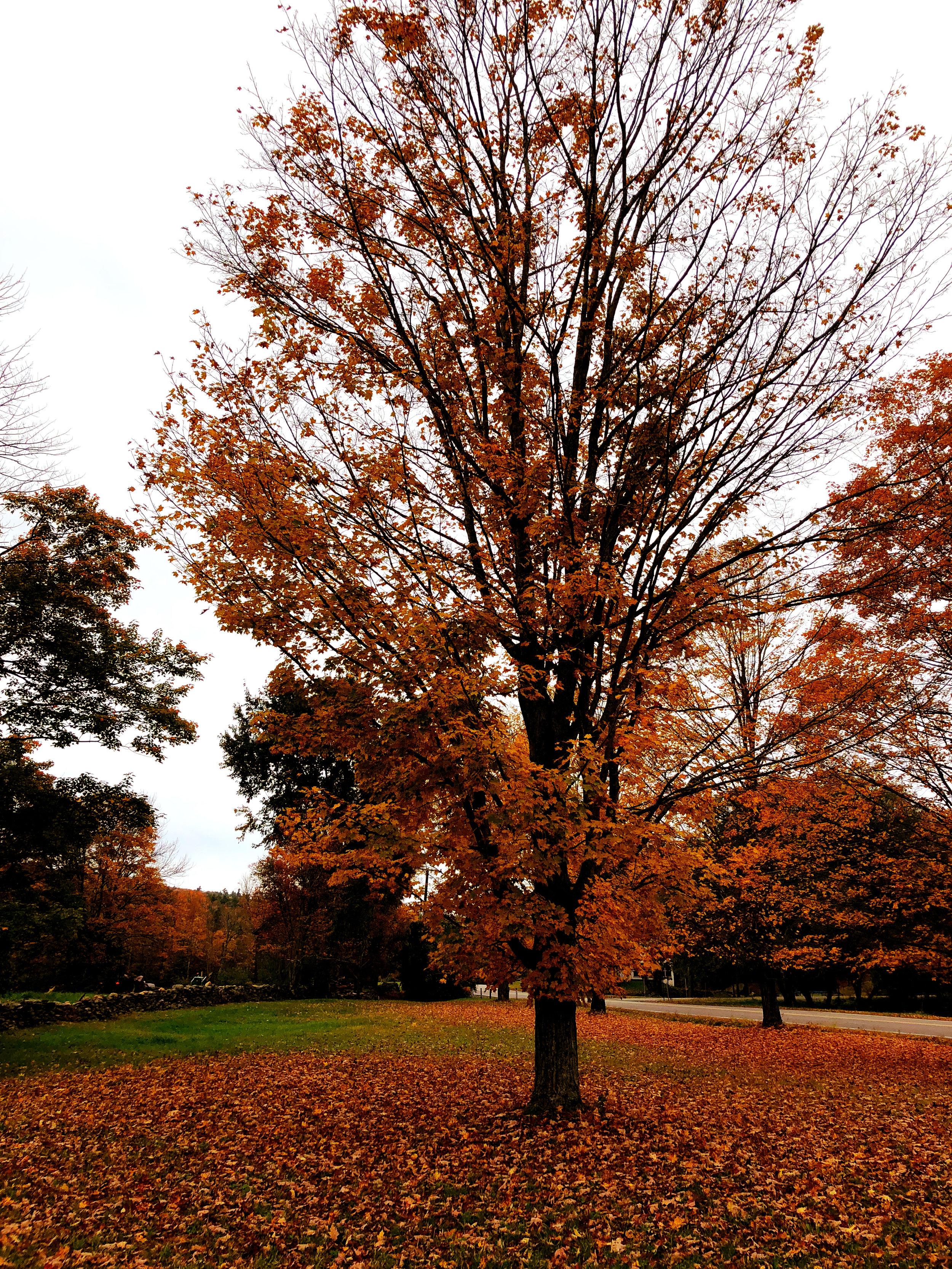 ©Simple Tree by Dena T Bray.jpg