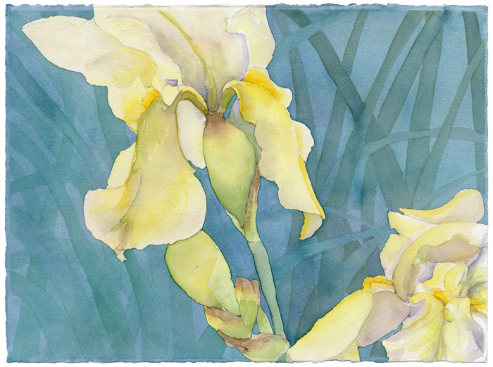 """Irises"", 2008, 11""x14"", watercolor on paper"