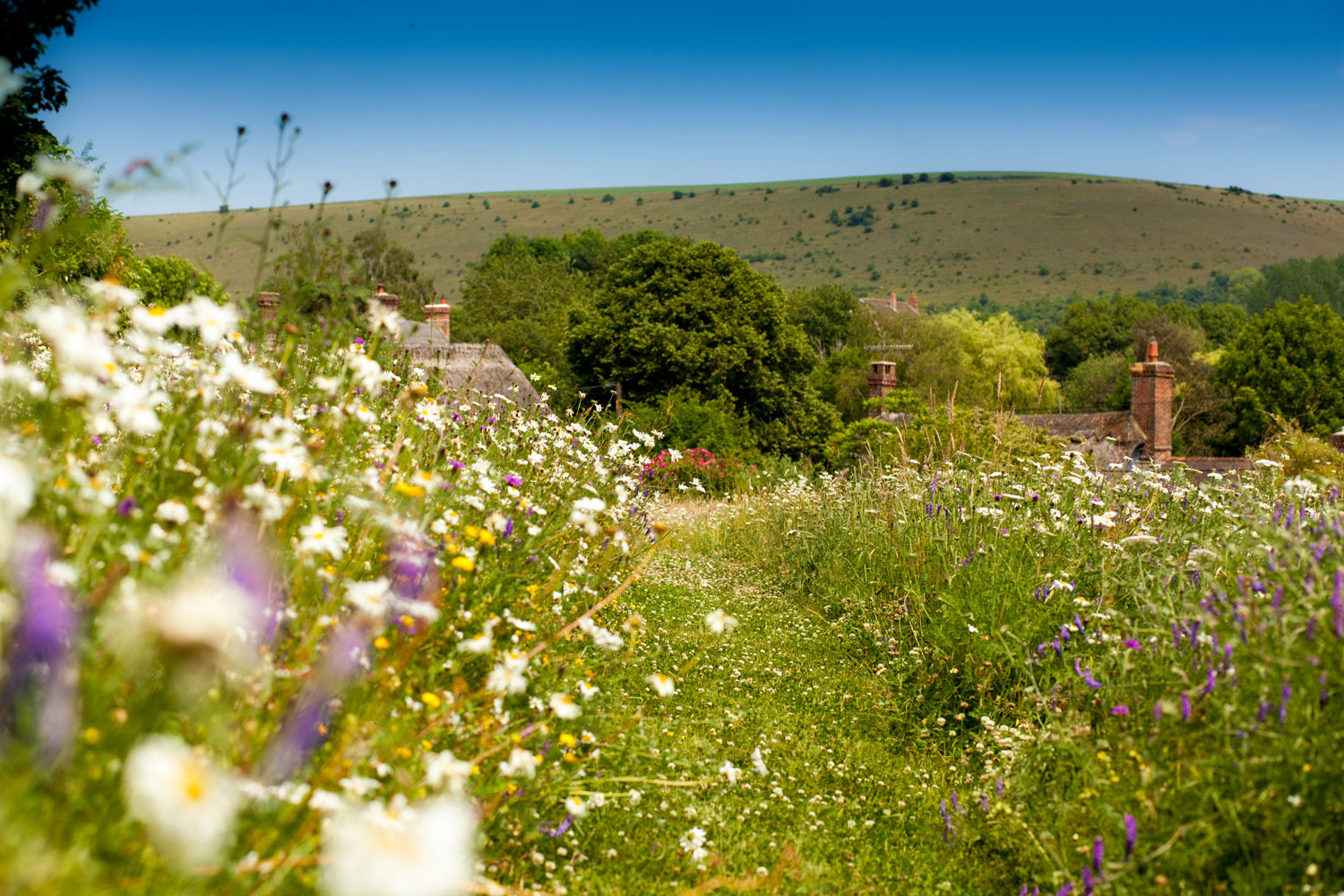 Natural wild flowers planted in Dorset