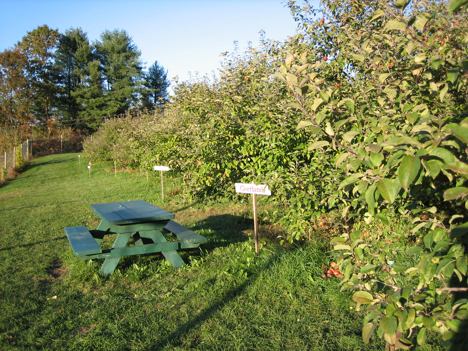 Easy Orchard Access    Our orchards, raspberries and blueberries are within an easy walk from our parking areas. You can also drive to them if it easier for members of your family, such as little ones or more senior members. We also offer hayrides as another way to reach our orchards and to enjoy the views of our farm and the Connecticut River along the way. The entire farm is handicap accessible for your convenience.