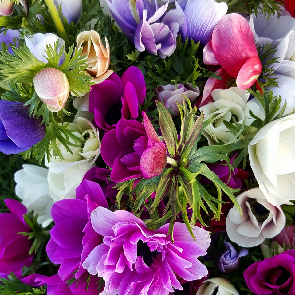 fun floral arrangment