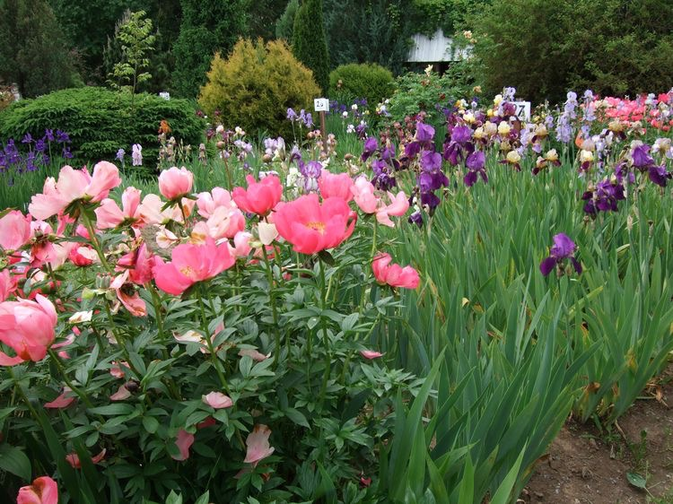 flowers on a flower farm