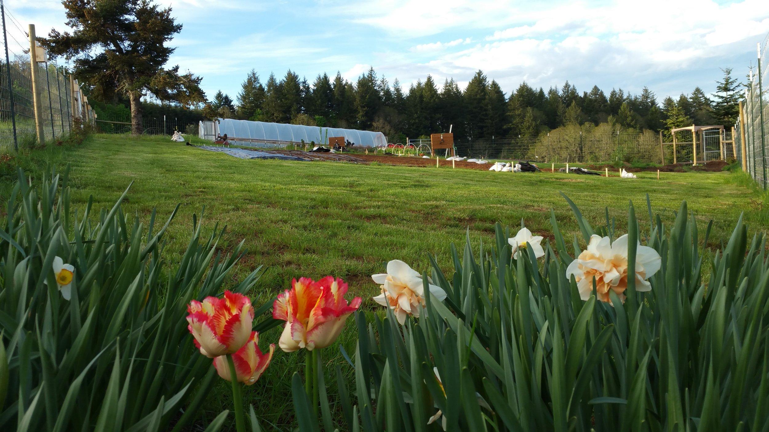 Witte Farm - Salem, Oregon