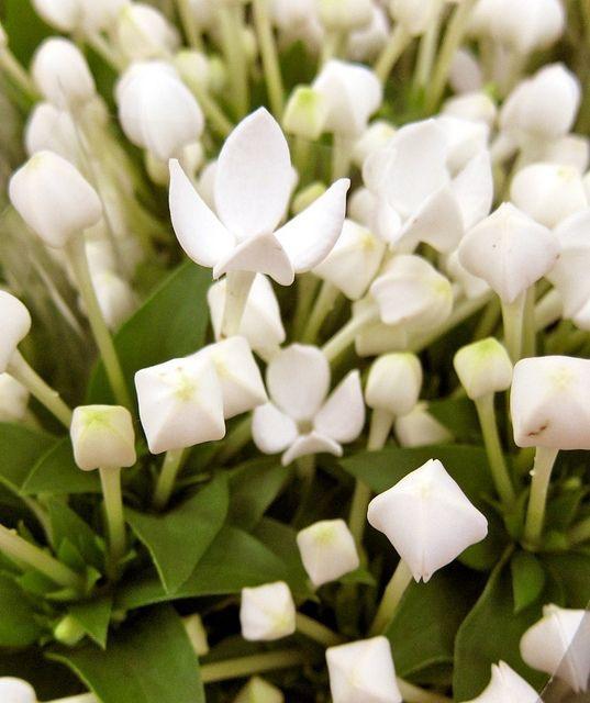 Februrary favorite flowers