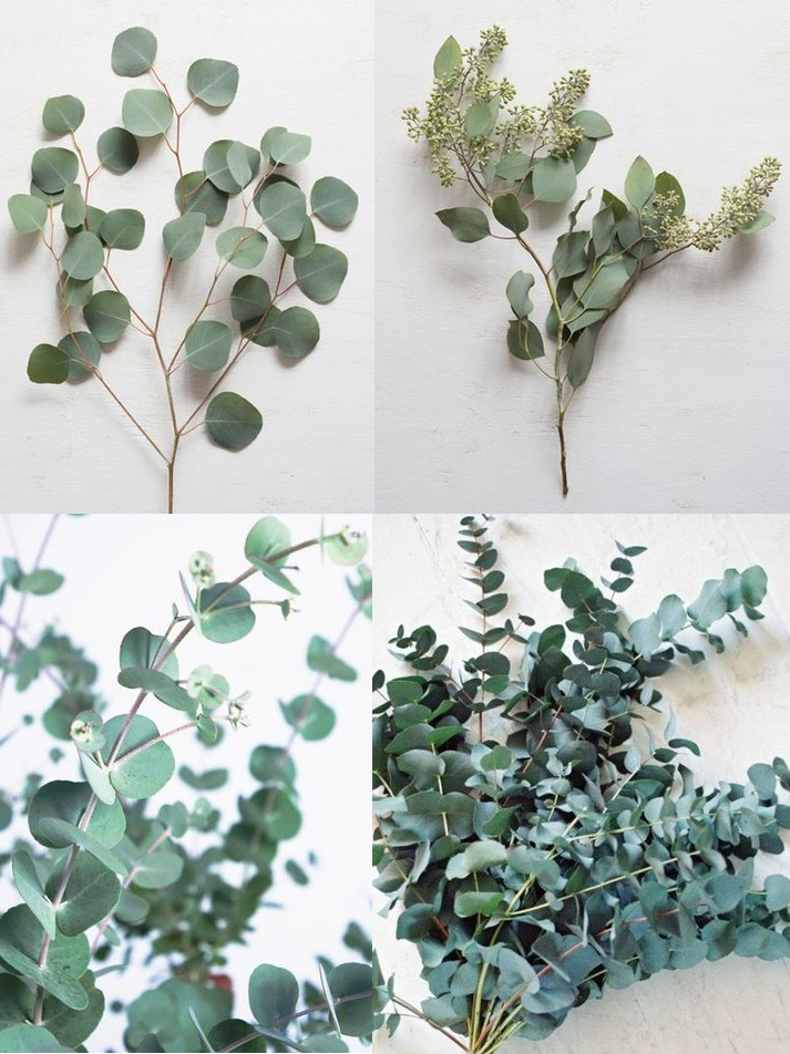 Silver dollar, Seeded, Gunni and Spiral Eucalyptus: - Season: year round, but seeded euc seeds in the late summerEucalyptus is so reliable and versatile! Here are the few different kinds that we like to use, depending on the style and what we're using it for. Spiral and gunni eucs in large scale installations gives our designs a unique texture. For bouquets, we typically like seeded and silver dollar best, due to their ability to shape and compliment our bridal and bridesmaids bouquets. They are also a really good base for garlands that you need to hang- they'll certainly bend for your installations, but they won't break! Also, side note: if you tend to break out when handling eucalyptus, try using the lotion called