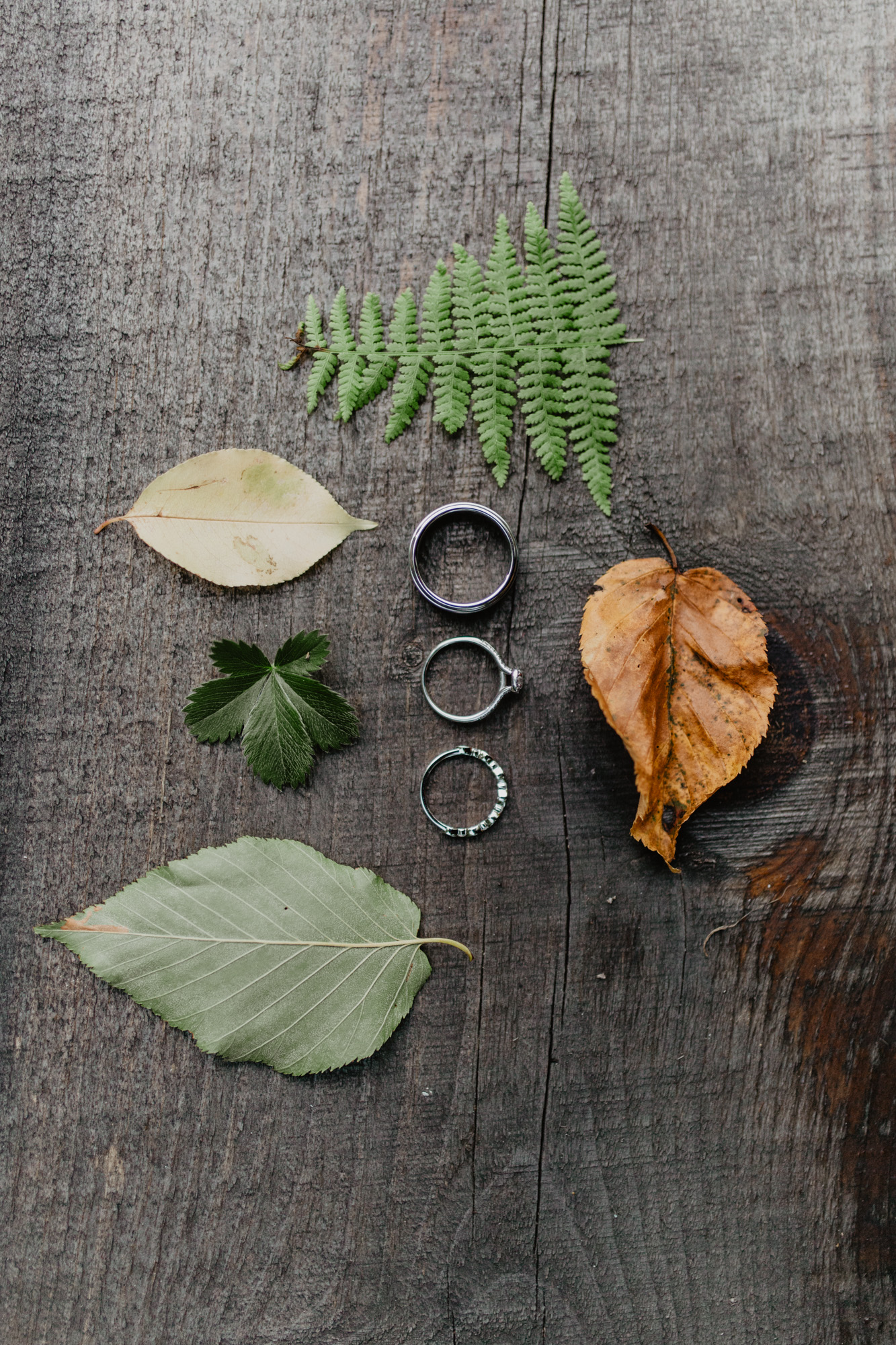 Wedding bands arranged with leaves