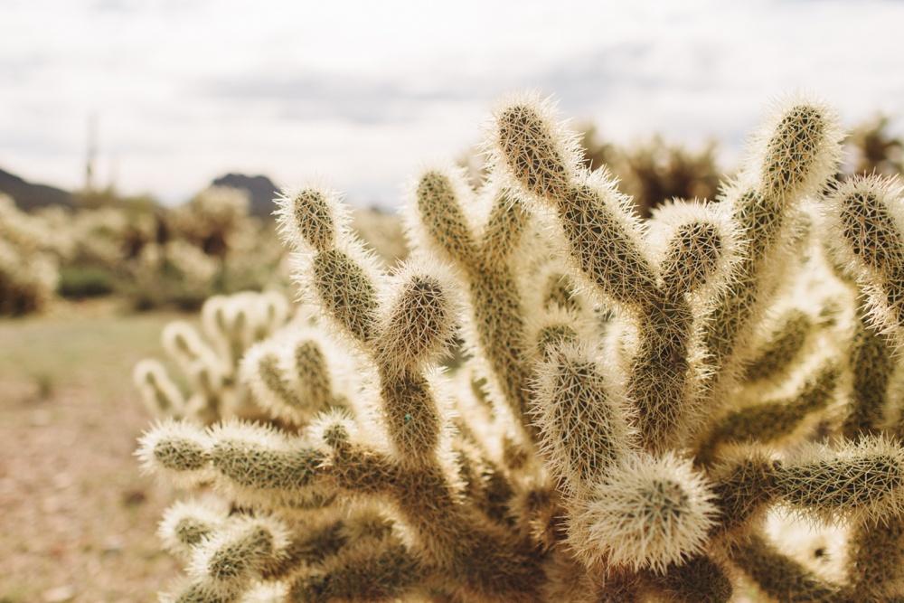 arizona-photographers-004.jpg