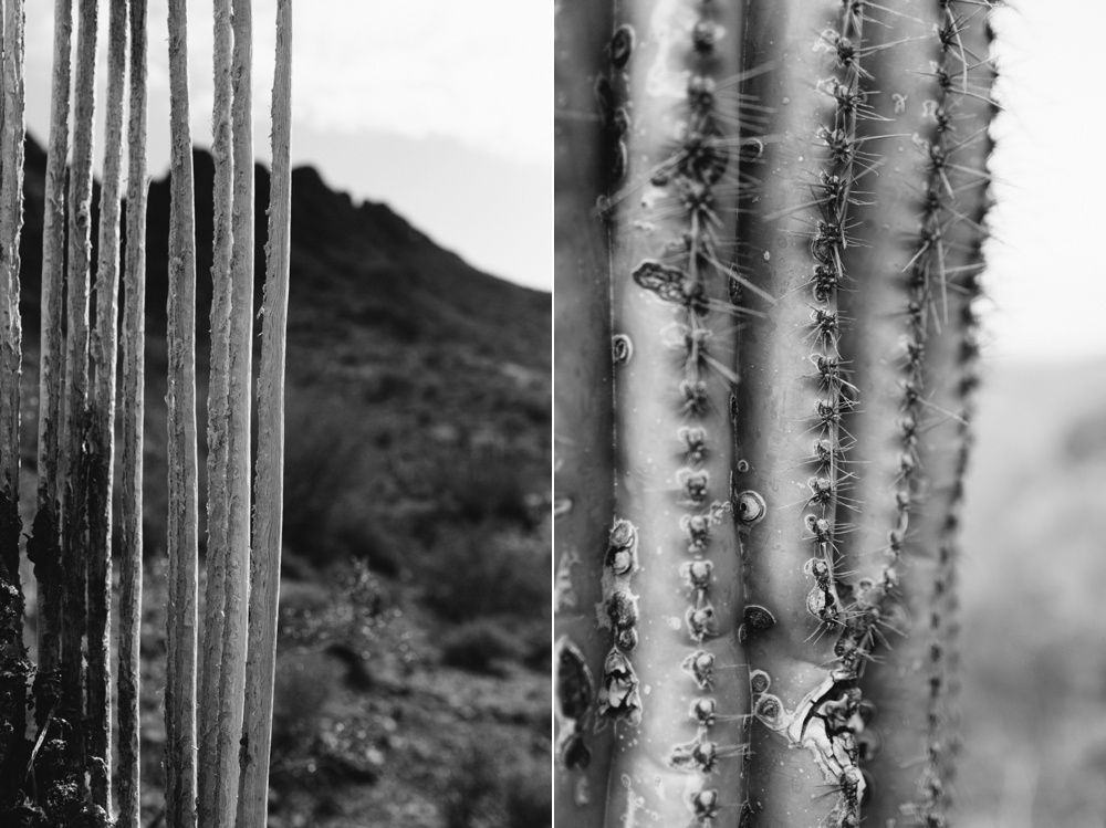 arizona-photographers-009.jpg