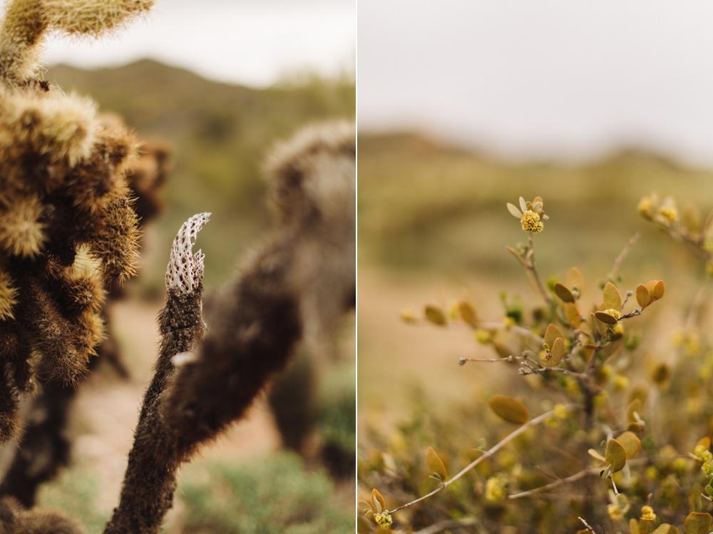 arizona-photographers-020.jpg