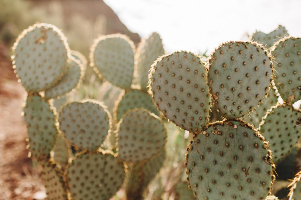arizona-photographers-021.jpg