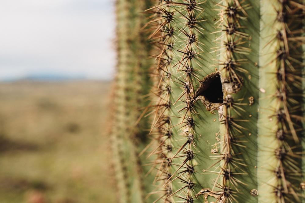 arizona-photographers-022.jpg