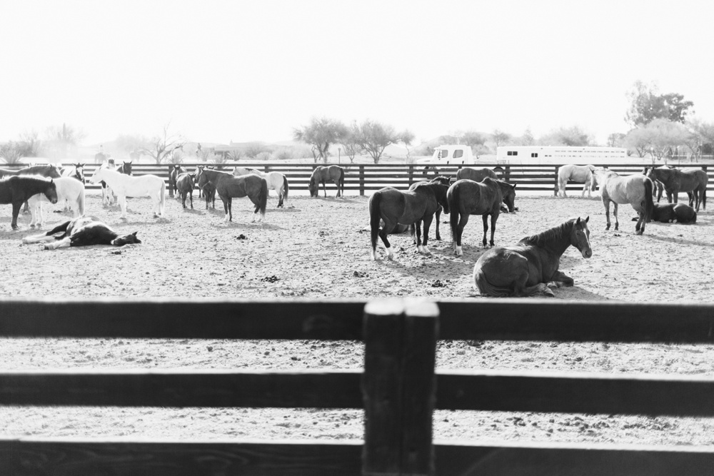 arizona-photographers-043.jpg