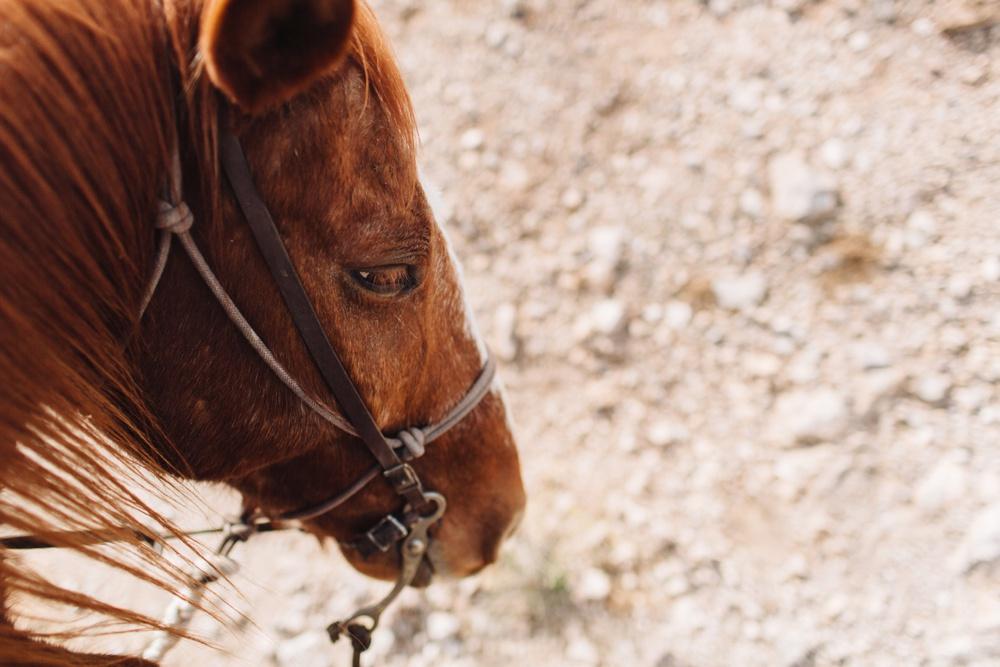 arizona-photographers-050.jpg