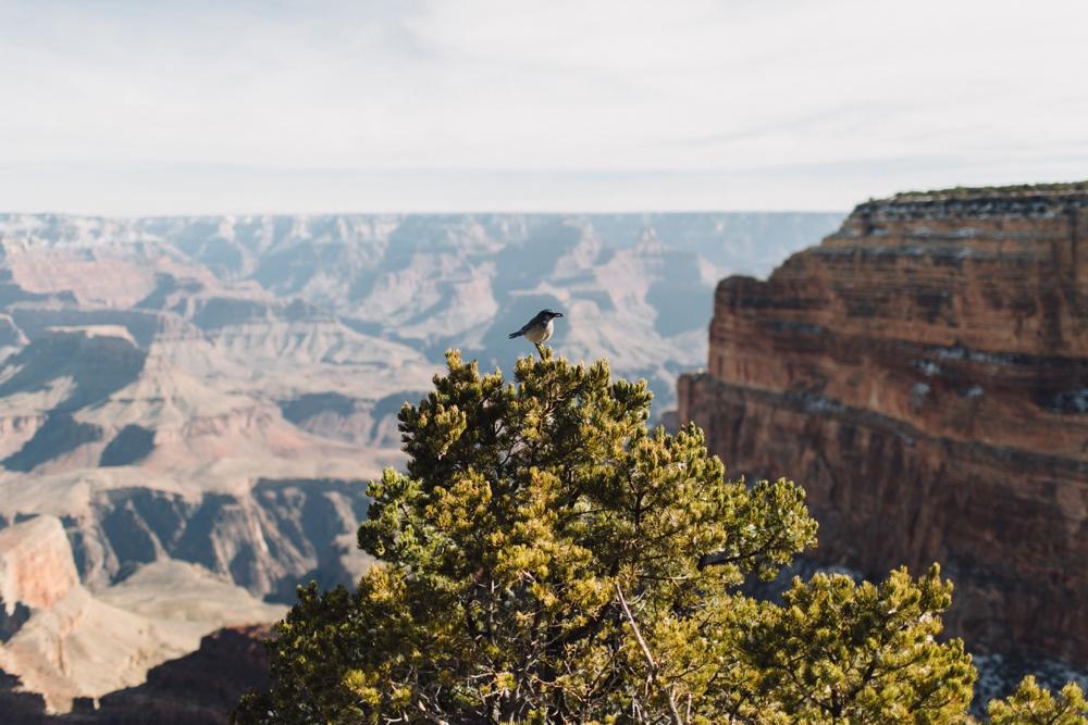 arizona-photographers-086.jpg