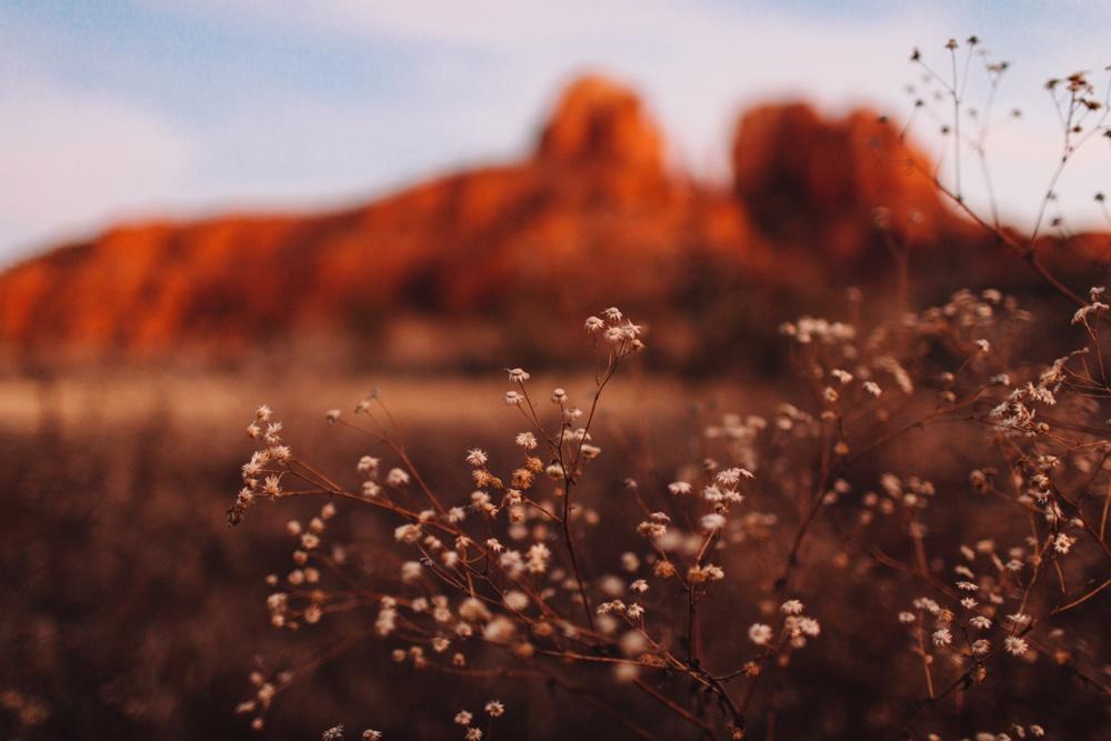 arizona-photographers-113.jpg