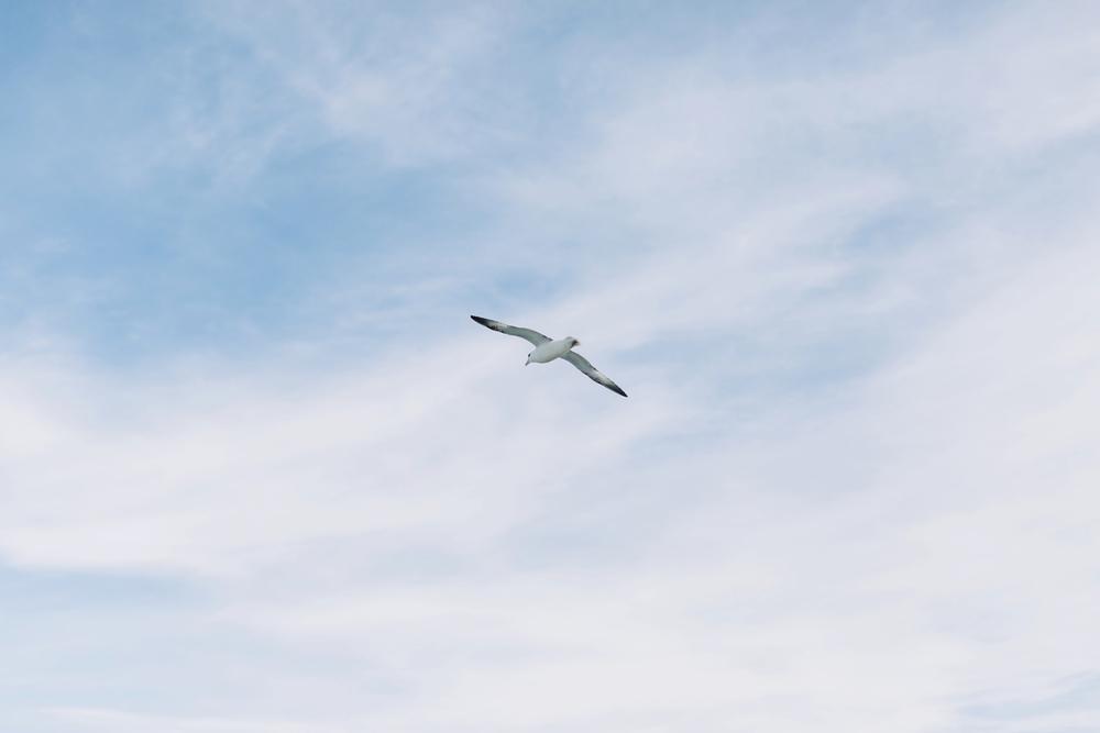 iceland-elopement-photographer-164.jpg