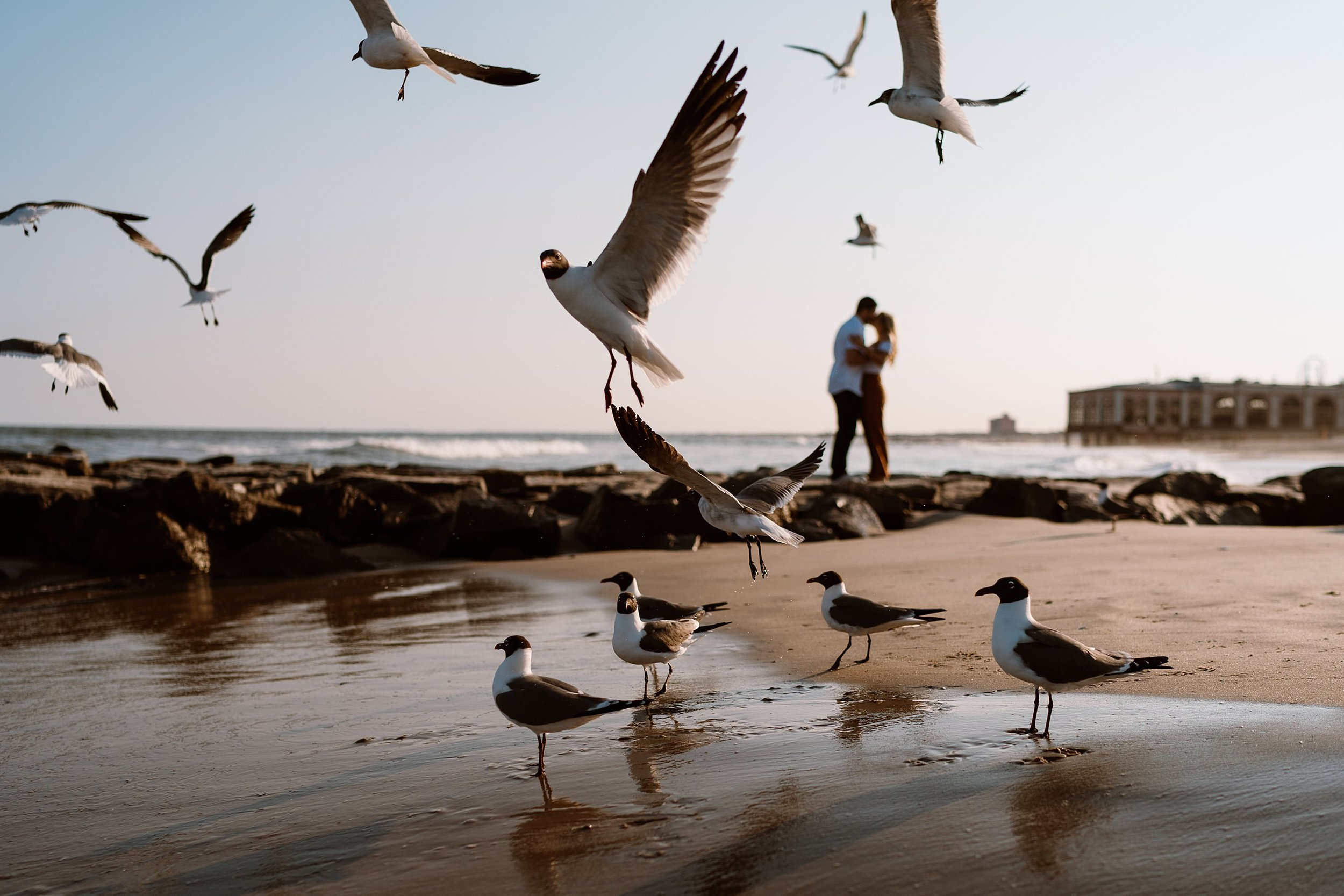 Ocean City Engagement with Seagulls