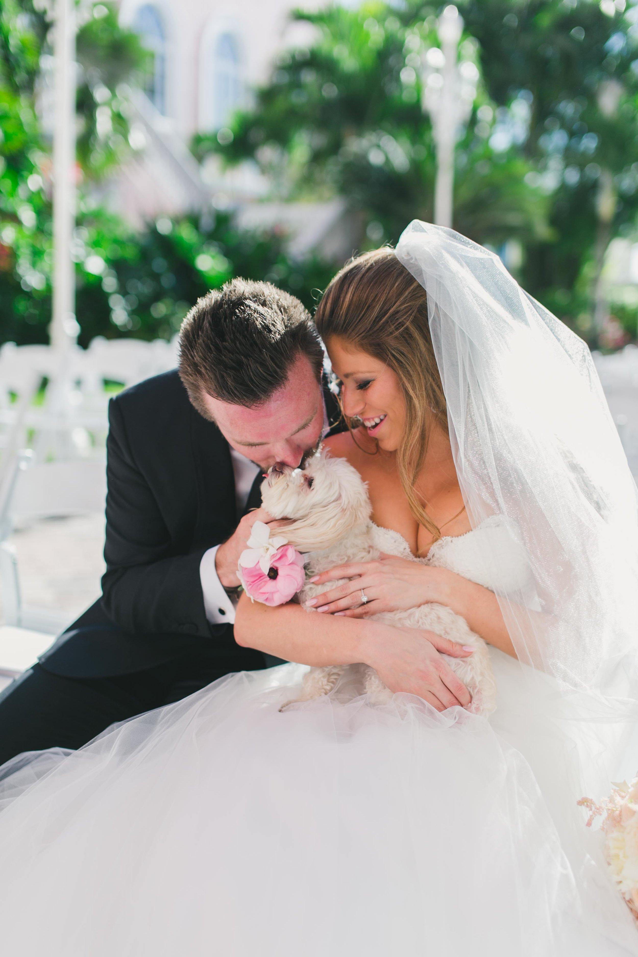 dog_in_wedding_don_cesar