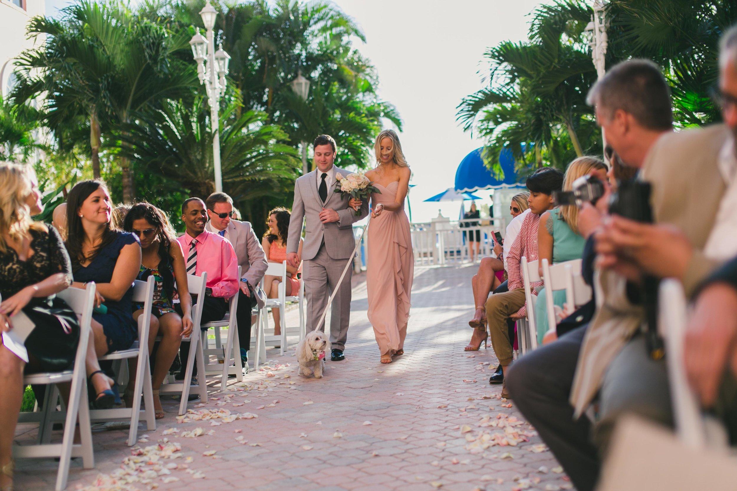 dog_in_wedding_st_pete