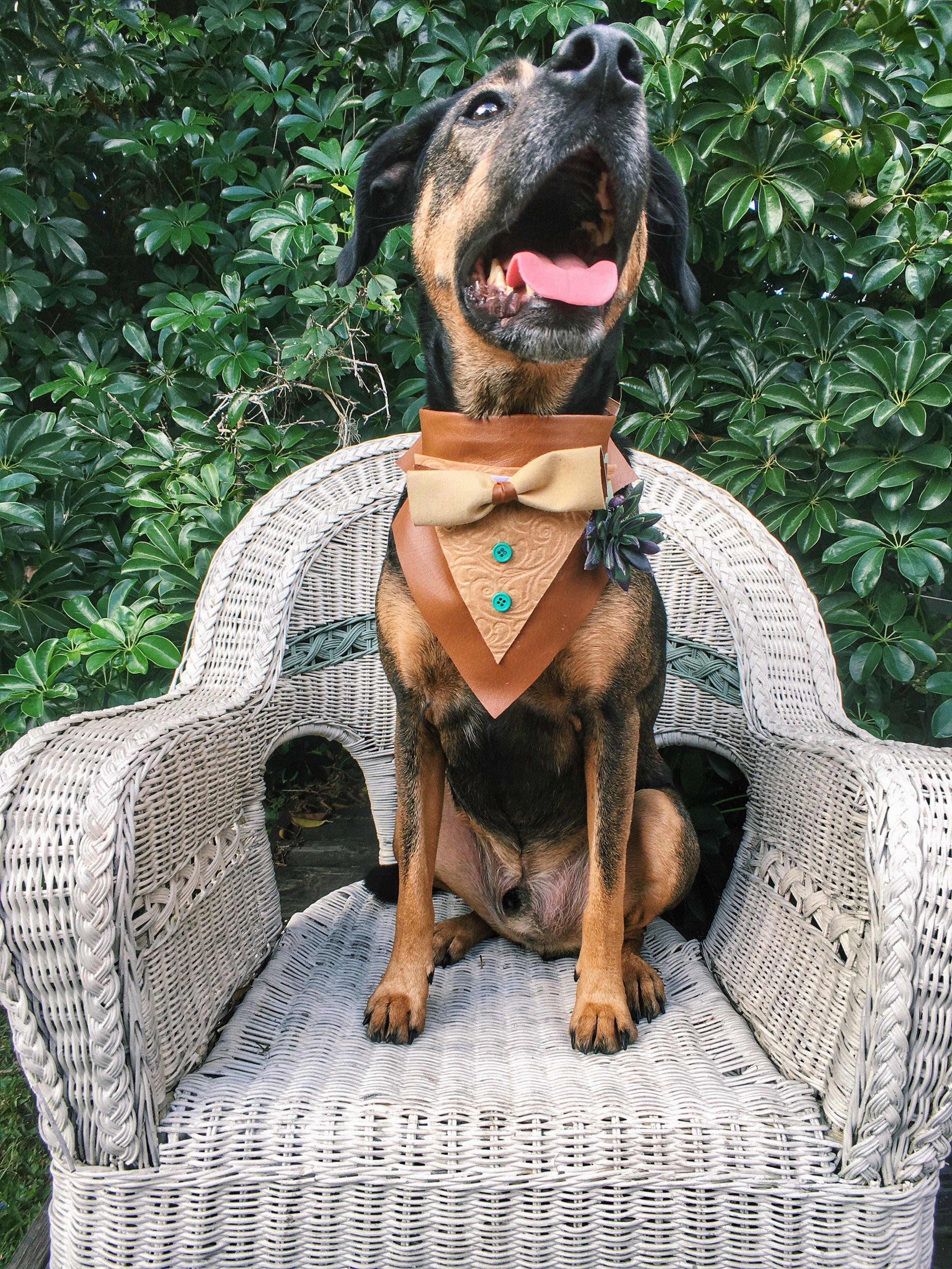 Fancy_dog_bandana
