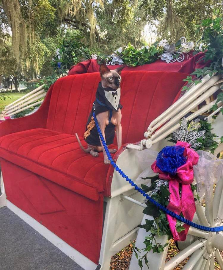 include_pet_in_wedding_tampa