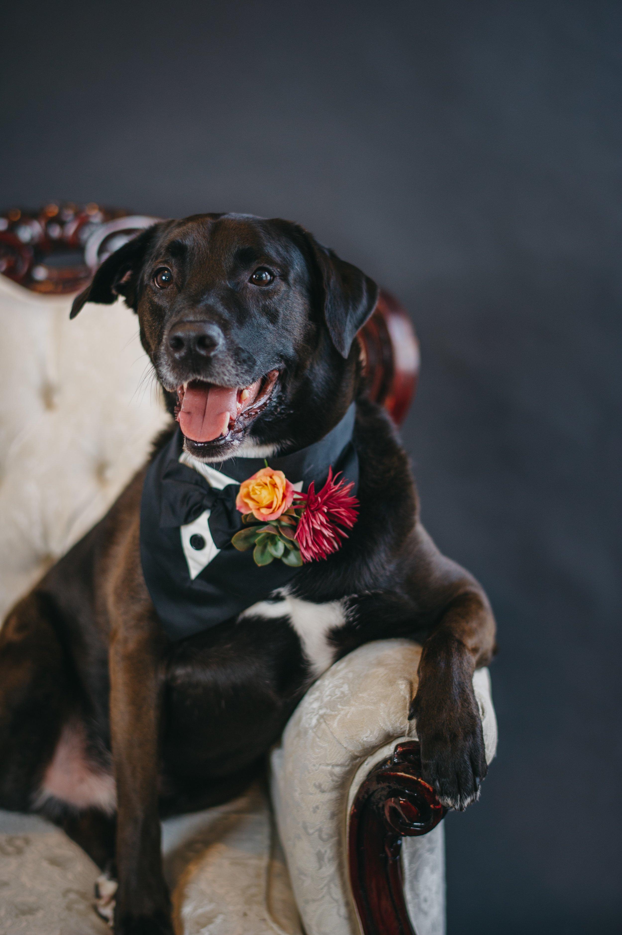 Wedding-Dogs-Rowdy&Enzo-24[1] (3).jpg