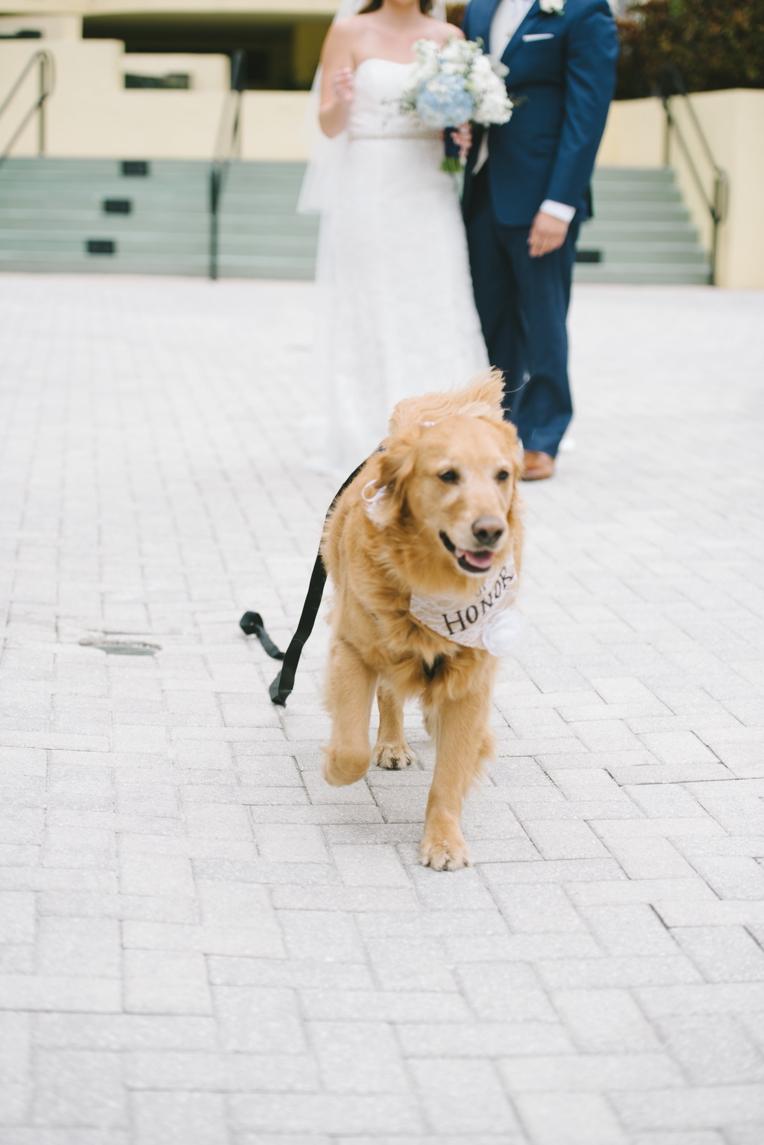 dog_in_wedding