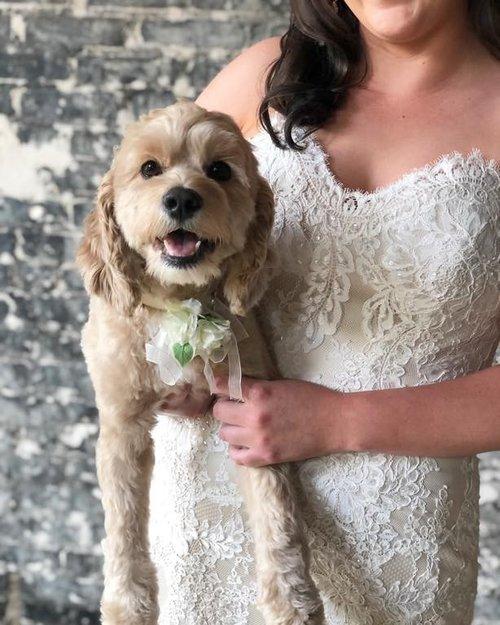 flower-girl-dog