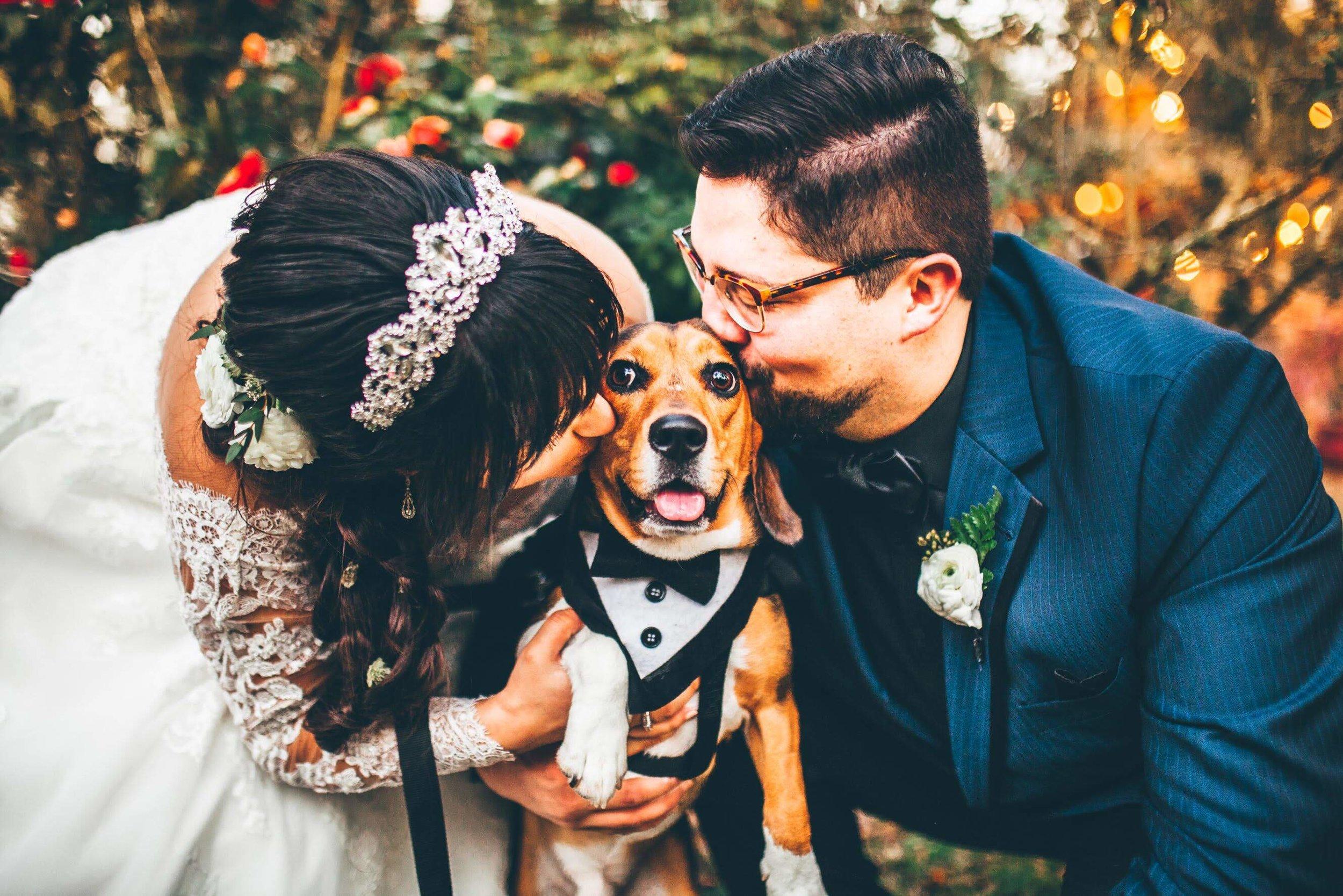 beagle-getting-kisses-at-wedding