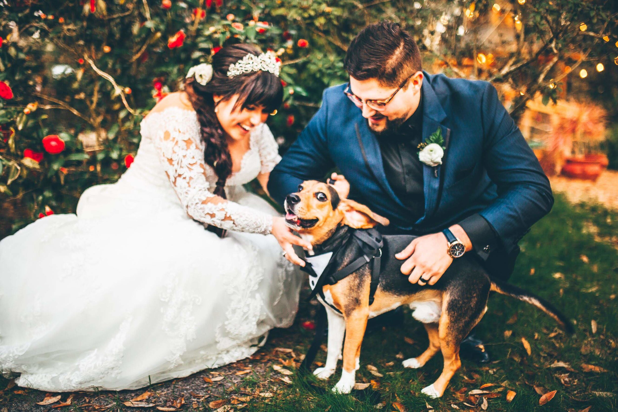beagle-with-bride-and-groom