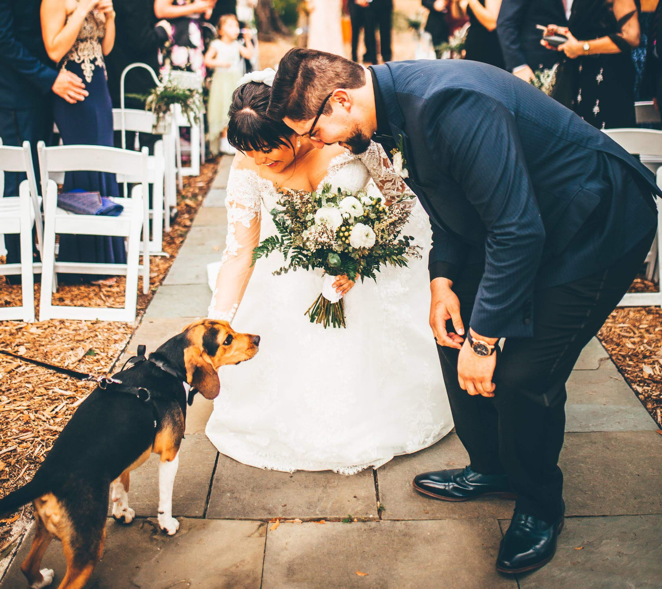 bride-and-groom-with-beagle-after-ceremony