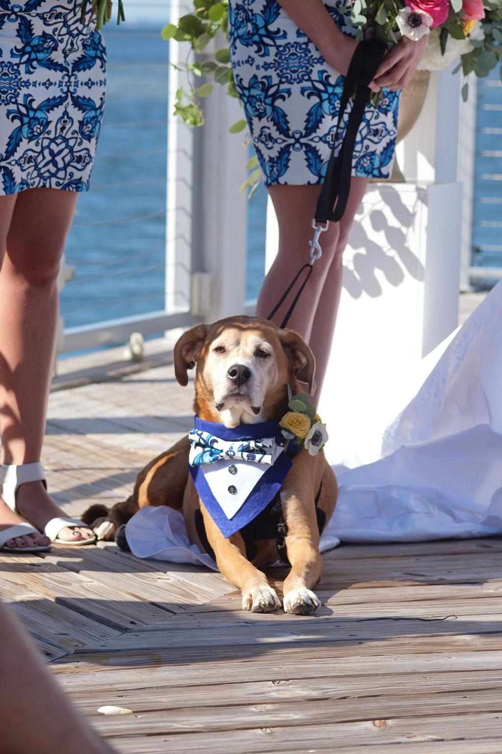 dog-in-wedding-ceremony