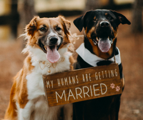 my_humans_are_getting_married