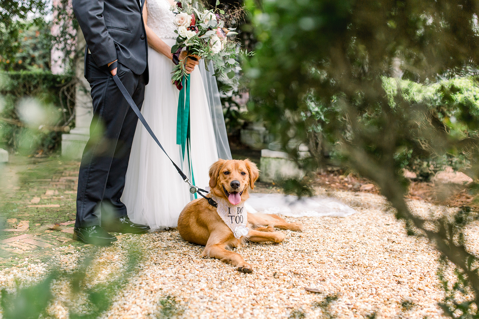 dog-in-wedding-georgia