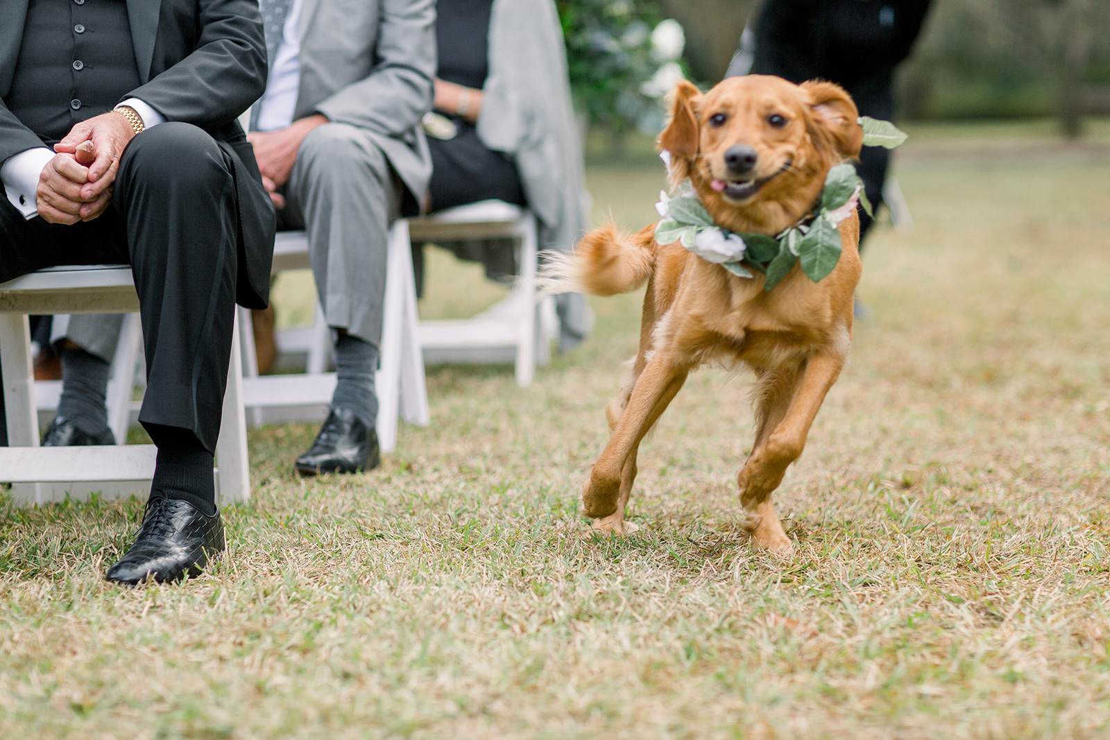 dog-running-down-aisle-at-wedding