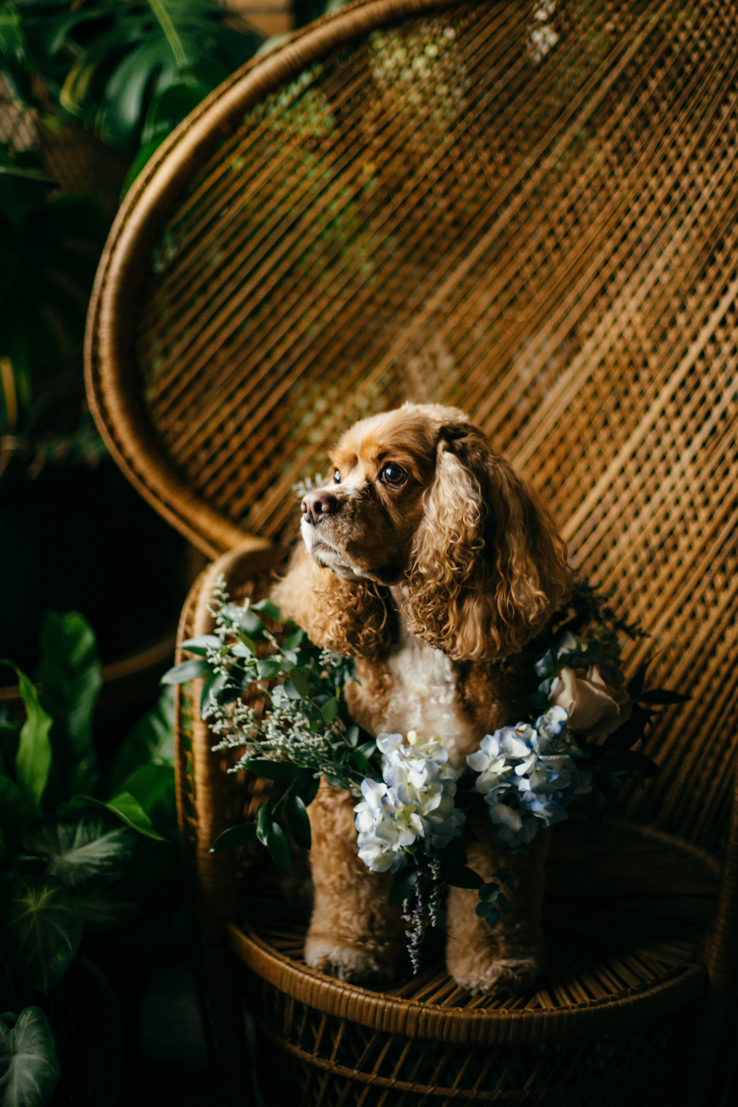 wedding-photographer-dog